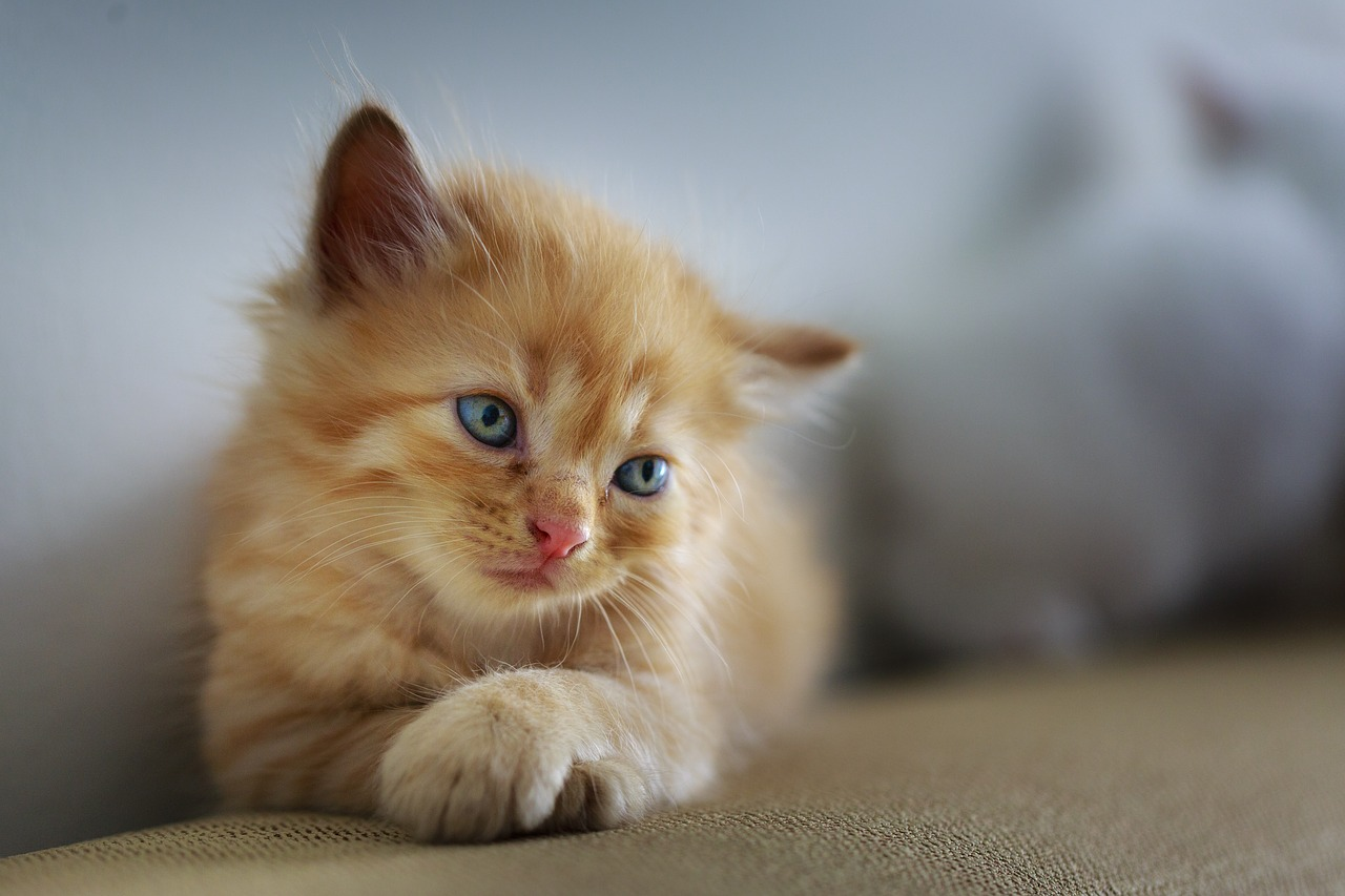 So viele Kittens wie möglich streicheln